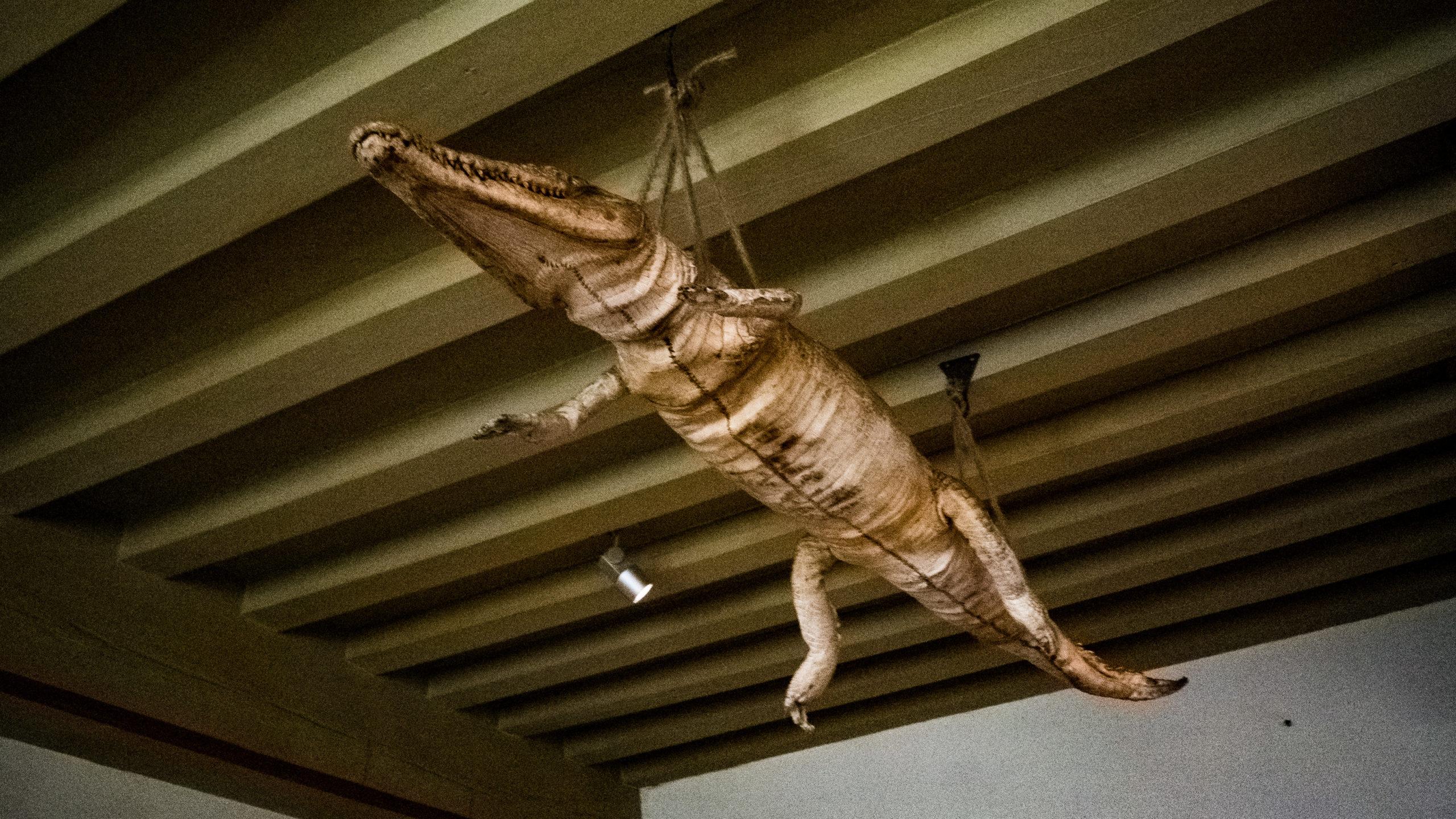 Aligator du Musée de la Maison de Rembrandt